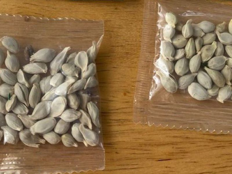 Amazon bars foreign sales of plants to the US following deliveries of mystery seeds