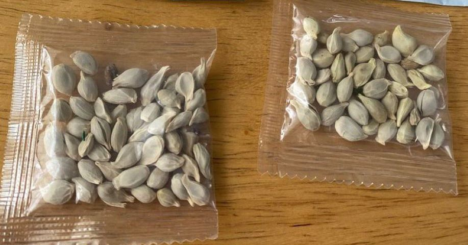 amazon-bars-foreign-sales-of-plants-to-the-us-following-deliveries-of-mystery-seeds